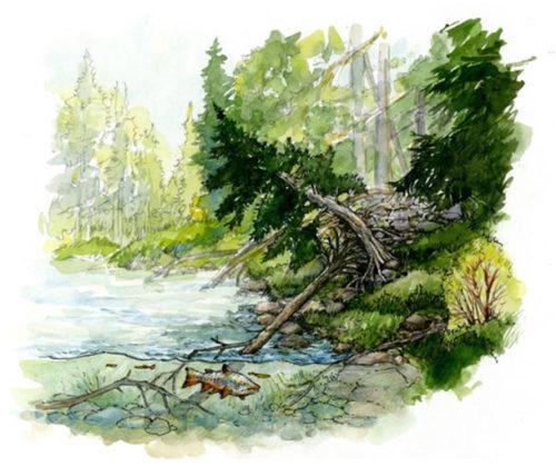 Bowmont Park Fish Habitat Enhancement Project.