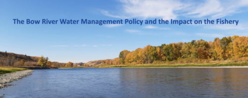 The Bow River Water Management Policy and the Impact on the Fishery