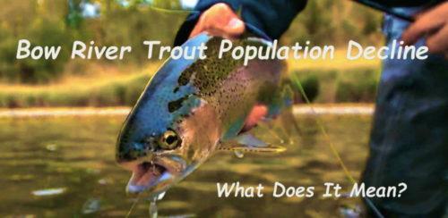 Bow River Trout Population Decline – What Does It Mean